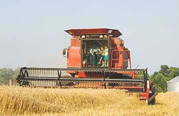 Farm tractor harvesting wheat