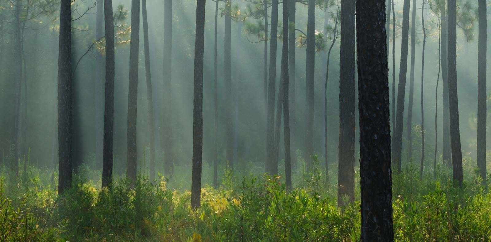 Forest in Alabama