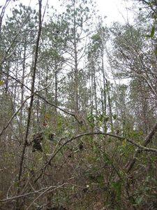 Magnolia 97 Acres