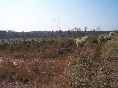 Hunting Land, Sumter County, AL