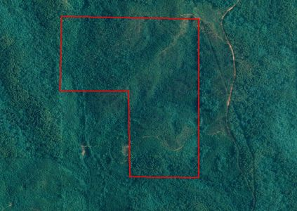 120 ac Timberland in National Forest