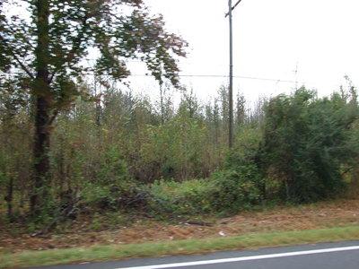 Sawyerville Hunting Land