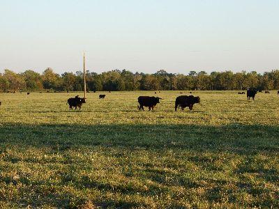1000 ac Farm / Ranch