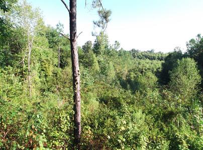 40 acres