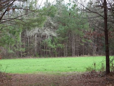 Marengo County – 450 acre Hunting Timber Tract