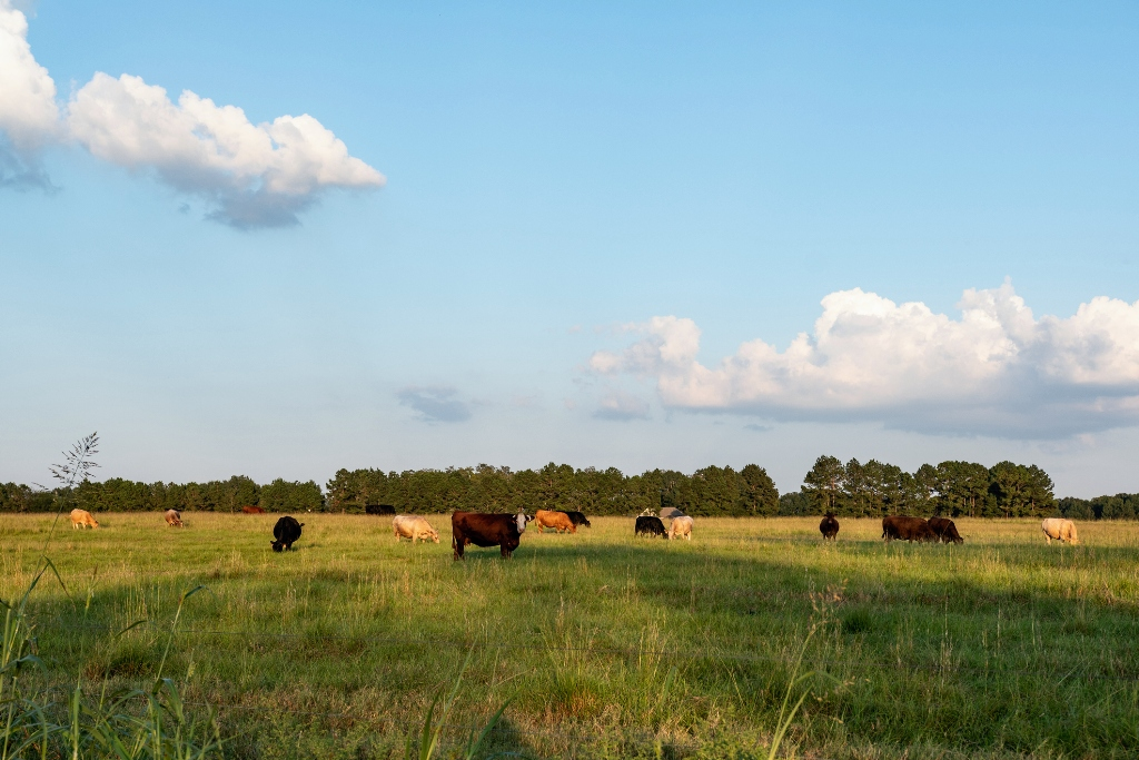 Farm Land in Alabama