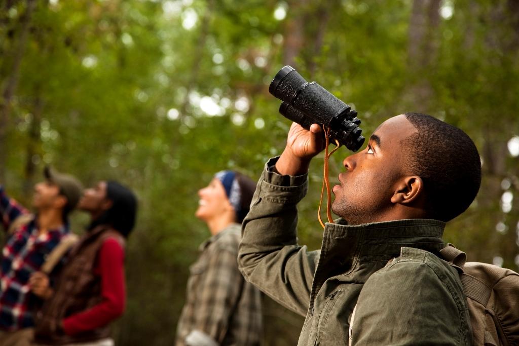 Birding in Alabama