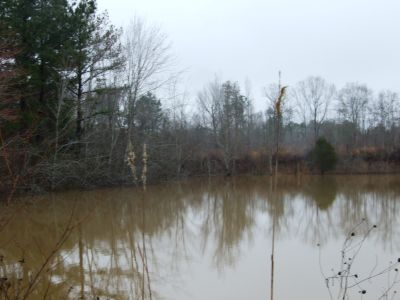 Perry County Timber – 93 acres