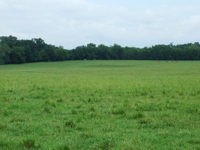 Small Hale County Ranch – 88 acres
