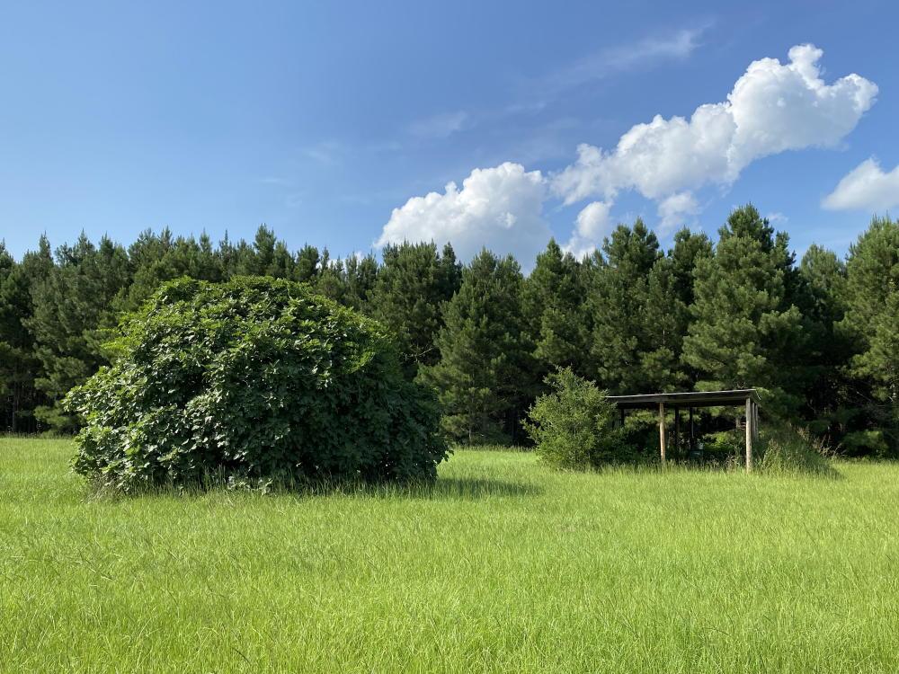 85 Acres Greene County