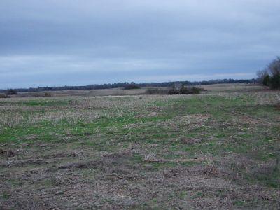 Great Ranch Property near Demopolis