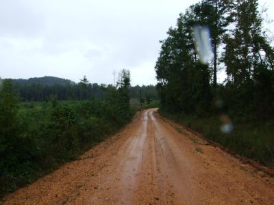 Hazelrig Timber Tract 122 +\- acres Perry County